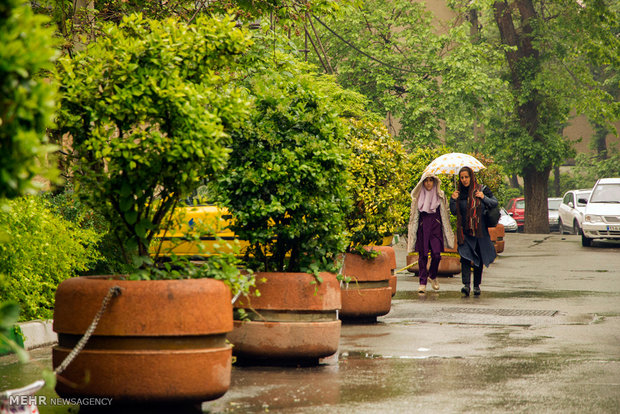 A rainy spring day in 'Bagh-e Irani' park