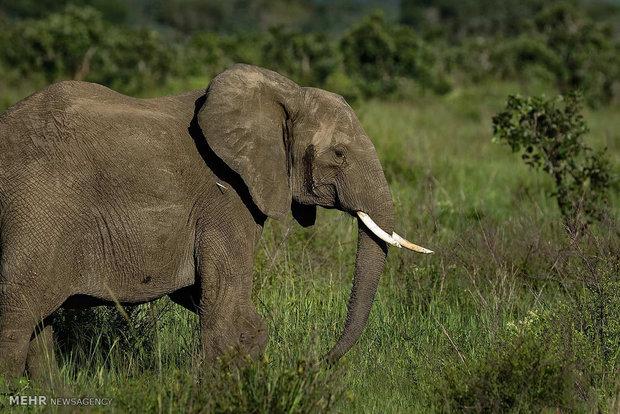 تھائی لینڈ میں ہاتھی نے گاؤں میں گھس کر تباہی مچادی