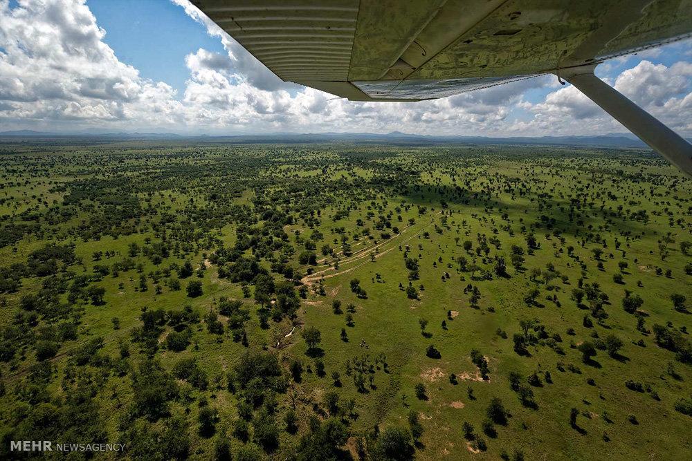 تلاش برای نجات جان فیل های آفریقایی