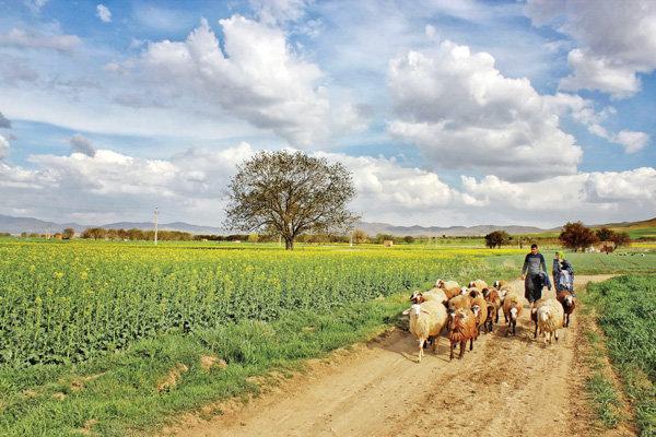 Farmlands in Toyserkan