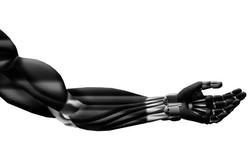 ابداع ماهیچه مصنوعی که با ورزش قدرتمندتر می شود
