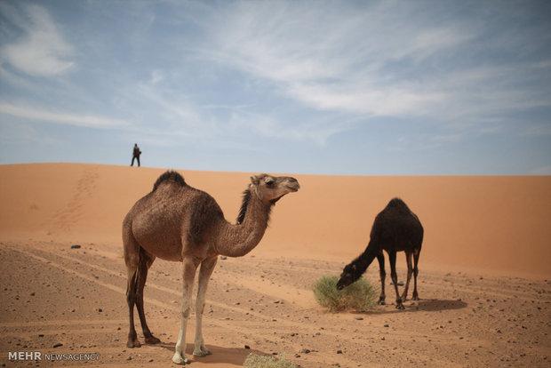 ماراتن ماسه ها در مراکش