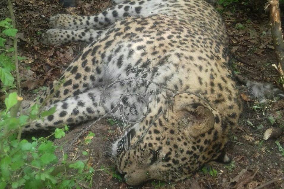 مشاور سازمان محیطزیست: محیطزیست در خواب غفلت به سر میبرد/ جفا به تنوع زیستی کشور