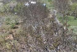 سرما ۳۰۷میلیارد تومان به بخش کشاورزی آذربایجان غربی خسارت زد