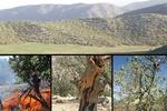 ارزیابی روشهای مناسب پایش خشک شدن جنگلهای زاگرس