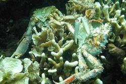 گهورهترین ناوچهی مردووی جیهان له دهریای عهمان دۆزرایهوه