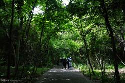 پهنههای طبیعی و نیمهطبیعی تهران جزو مناطق حفاظت شده محسوب شوند