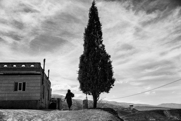 یکی از زنان روستای آق قلعه در کنار درخت سرو به سمت خانه خود میرود.