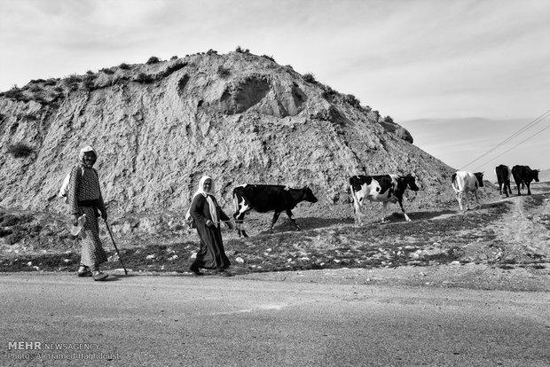 عمه گل امان زاده (نفر اول از چپ) 56 ساله و بی بی پران دوه جی 62 ساله دامهای خود را از چرا به سمت روستای چناران برمی گردانند. آنها برای امرار معاش خود مجبور به دامداری هستند که با وام پرداختی کمیته امداد آنها را خریداری کردهاند.