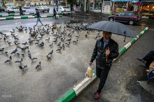 بارش باران در بیشتر نقاط کشور/ترافیک در آزادراه کرج