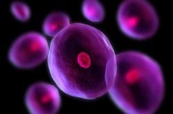 دور زدن سیستم های دفاعی بدن توسط سلول های سرطانی