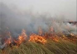آتش سوزی در تالاب