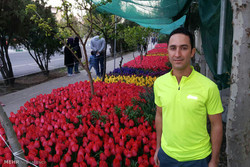 Houman Ardebili plants hundreds of tulips out of love for his homeland's mothers