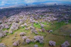 پیشنهادهای حفظ باغستان سنتی منطبق بر واقعیت های موجود باشد