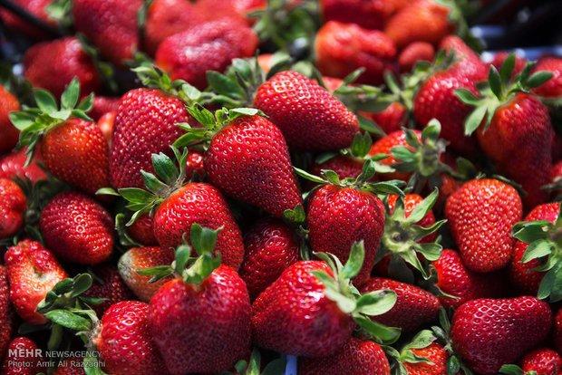 کاهش میزان مواد اولیه واحدهای صنعتی مرتبط با توت فرنگی در دماوند