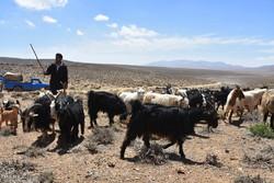 ۱۲۷ میلیون تومان تسهیلات خشکسالی به عشایر دامغان پرداخت شد