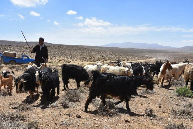 چتر حمایتی بیمه روستاییان و عشایر گسترش مییابد