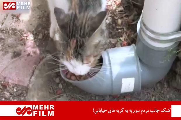 Sokakta kedileri besleyen Suriye halkından farklı görüntüler
