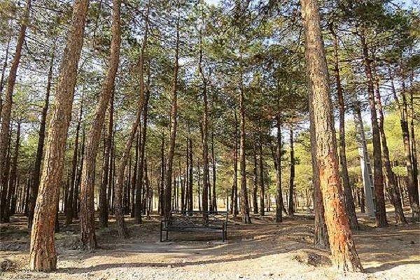 اجرای طرح مبارزه با سوسک پوستخوار کاج در بوستان جنگلی بیرجند