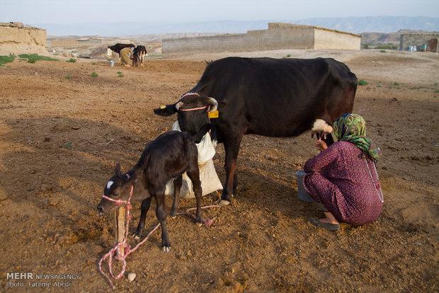 Türkmen kadının yaşam mücadelesini anlatan fotoğraflar