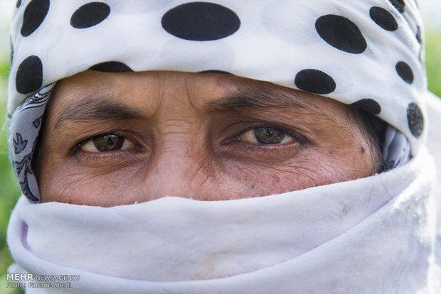 رابعه رخشانی متولد سال 1357 در شهر زابل . واکنون ساکن روستای مهدی آباد شهرستان کلاله است.