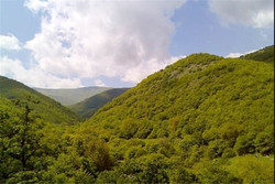 حفظ ذخیره گاه های جنگلی در راستای صیانت از آب و خاک دنبال می شود