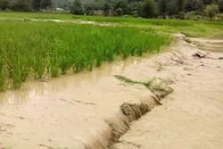 خسارت سنگین بارندگی های بهاری به باغات گناباد