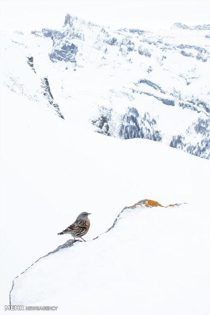 برندگان مسابقه انجمن عکاسان حیات وحش آلمان