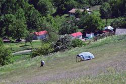 ۲۳۰ هکتار از مراتع کردستان با گیاهان دارویی غنی سازی می شود