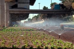 سالانه ۴۵ میلیارد ریال برای نگهداری فضای سبز سمنان هزینه میشود