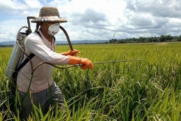 هشدار درباره مبارزه به موقع با آفات در شرایط خشکسالی