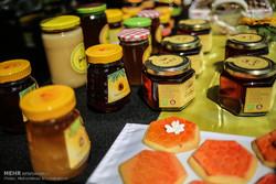 روز جهانی زنبور عسل
