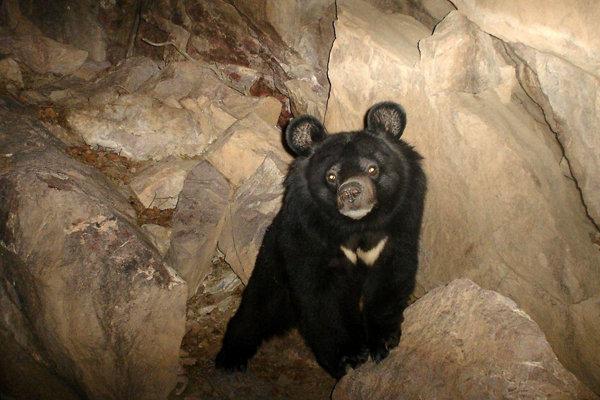 پایش زیستگاه خرس سیاه در شهرستان سرباز آغاز شد