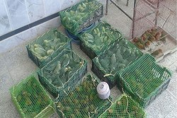 جلوگیری از قاچاق ۳۰۰ پرنده از آبادان