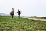 تربية الخيول في قرية صوفيان