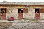 Raising horses in Sufian village