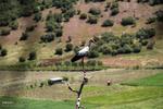 طائر اللقلق مهاجر يعبر حدود إيران