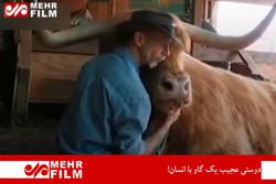 فلم/ گائے کی انسان کے ساتھ عجیب دوستی