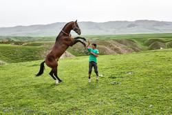 پرورش اسب در روستای صوفیان