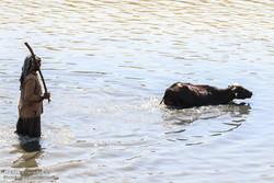 عودة الحياة لنهر الكرخة في الأهواز /صور