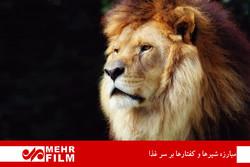 حیوان