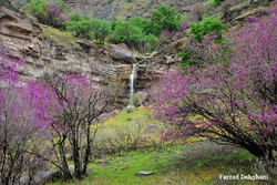 A waterfall in western province of Lorestan surrounded by Judas-trees/ Photo by Farzad Dehqani