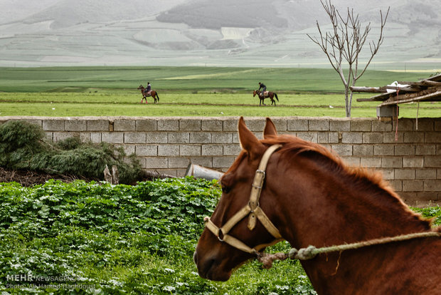 Raising horses in Sufian village