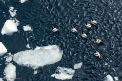 تغییرات نگران کننده در قطب جنوب