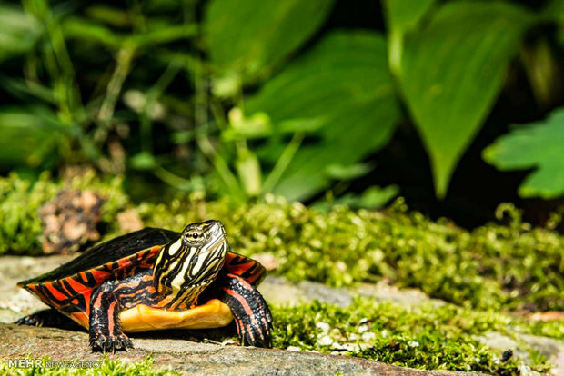 تصاویر زیبا از دنیای لاک پشت ها