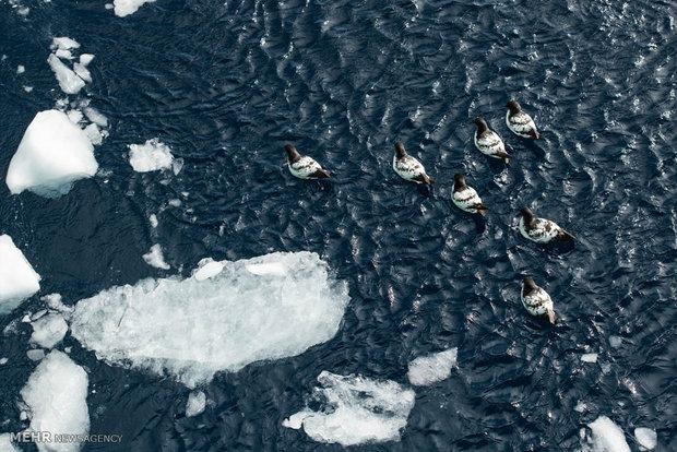 آب شدن یخ های قطب جنوب سرعت گرفته است