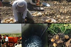 غیربومیهایی که کنگر خوردند و لنگر انداختند/ اجاره اراضی به قیمت تخلیه آبخوان