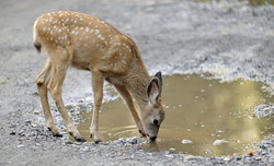 drought in wildlife