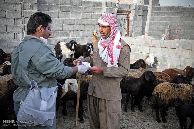 مجوز خروج دام زنده از شمال سیستان و بلوچستان صادر شد
