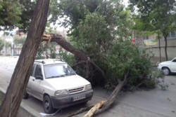 سقوط درخت بر اثر طوفان